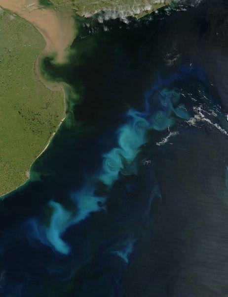 Снимок из космоса, «цветение воды» у побережья Аргентины