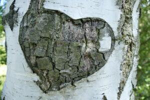 Как и зачем добывают соки из деревьев?