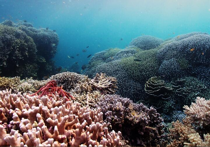 Подводные виды