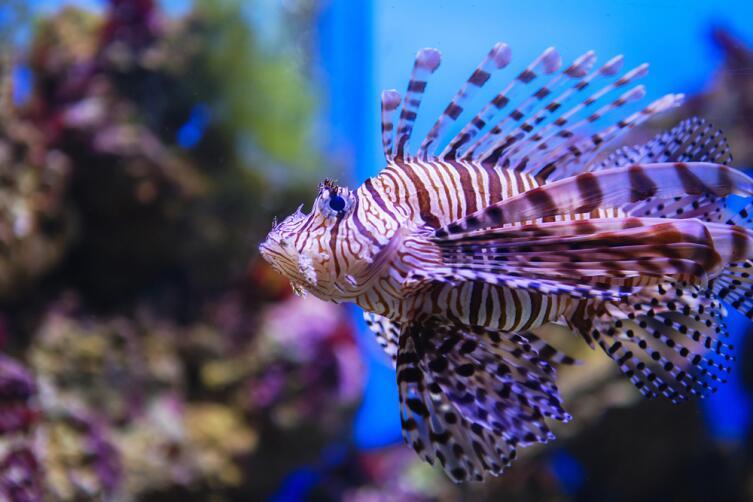 Где можно погулять внутри  аквариума и остаться сухим?