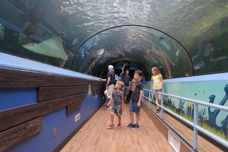В Сиднейском океанариуме