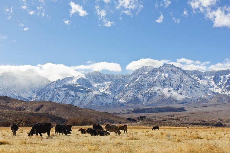 Горы Сьерра-Невады