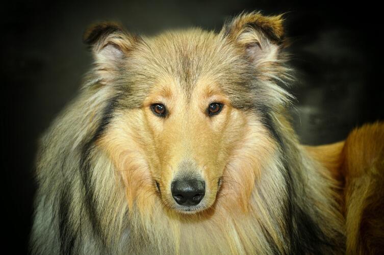 Собачья энциклопедия. Как ухаживать за собакой?