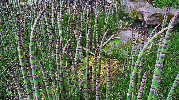 Какое растение способно поцарапать металл?