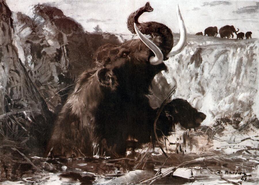 Почему Россия - Родина слонов?