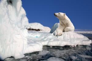 Как люди покоряли Северный полюс?