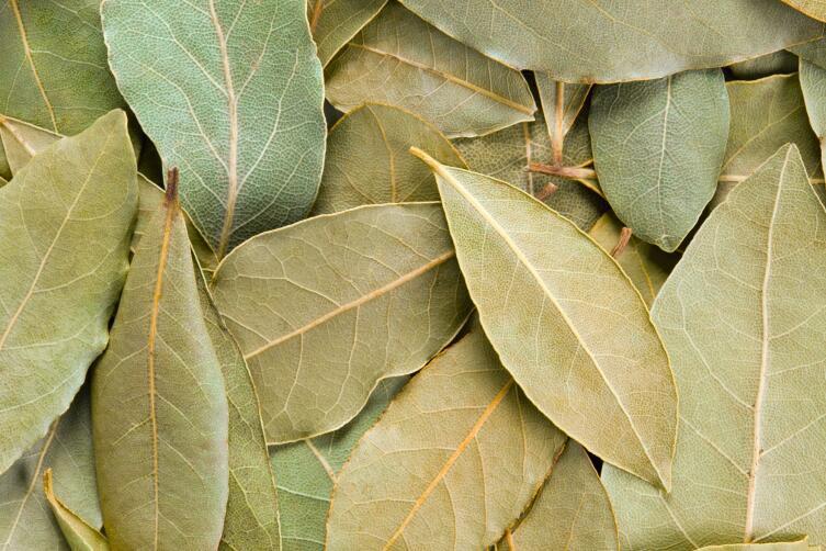 А вы знали, что лавровый лист избавляет от неприятных запахов?