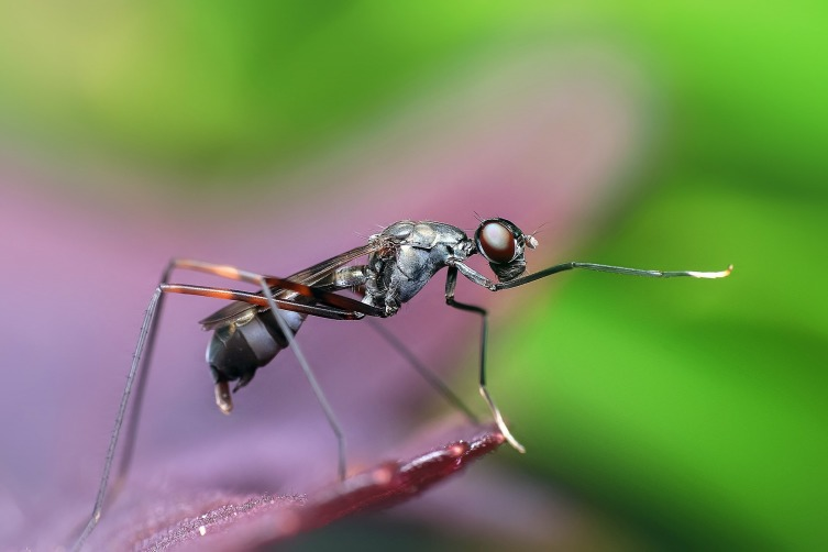 В мире животных. Как видят и слышат муравьи?