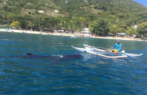 Филиппины: где можно поплавать с акулами?