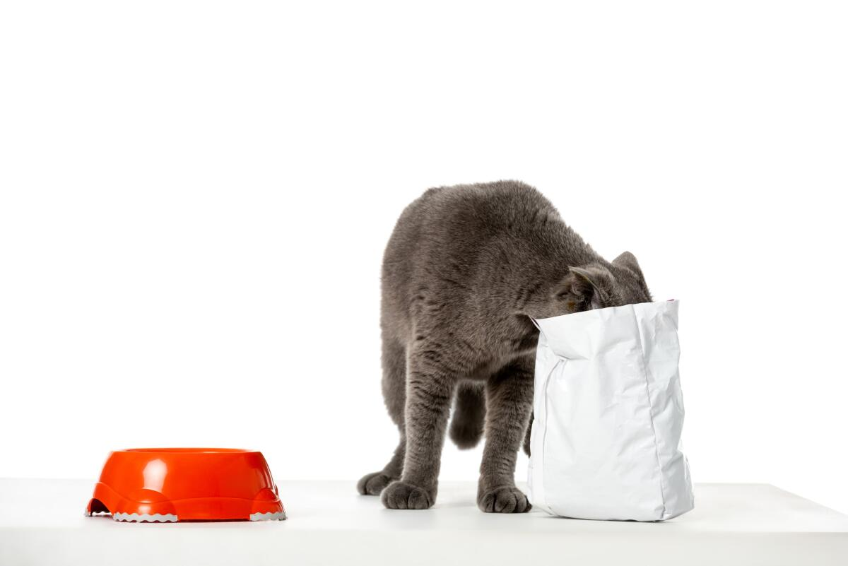 Как выбрать сухой корм для кошки?