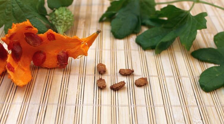 Семена момордики
