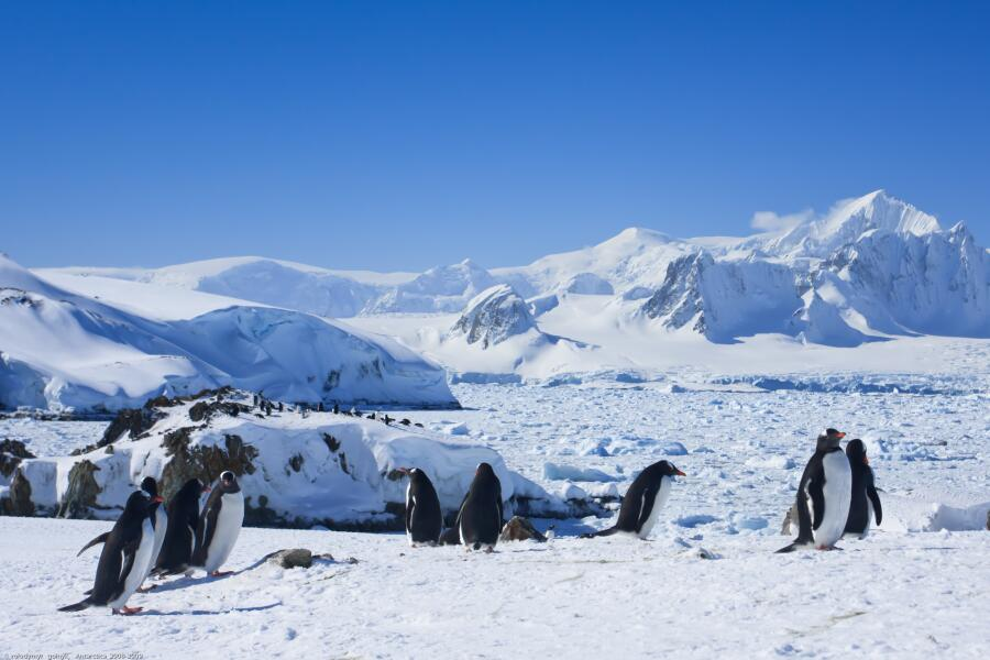 Какая в Антарктиде валюта?