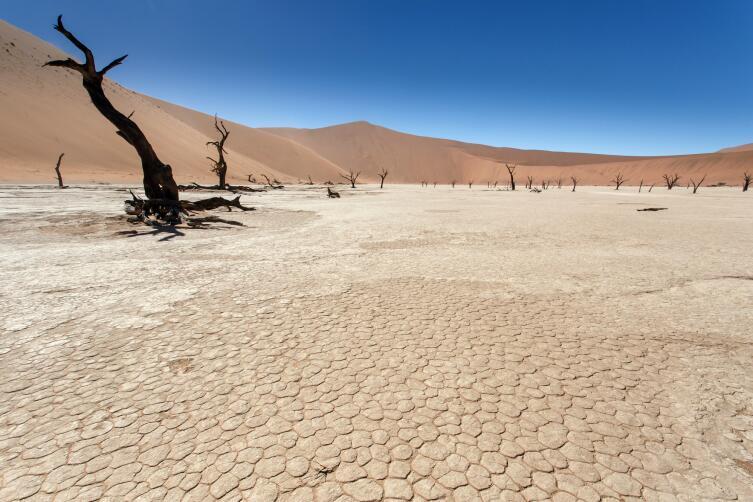 Гладкая поверхность пустыни скрывает острые колючки, которые протыкают колеса