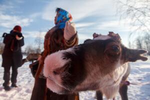 Что посмотреть в Ненецком автономном округе? Девять «почему стоит ехать в Нарьян-Мар»