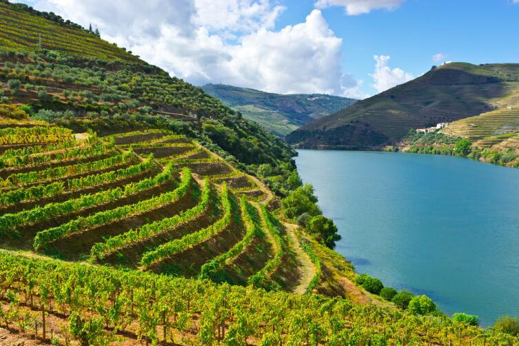 Где расположен самый высокогорный виноградник Европы?
