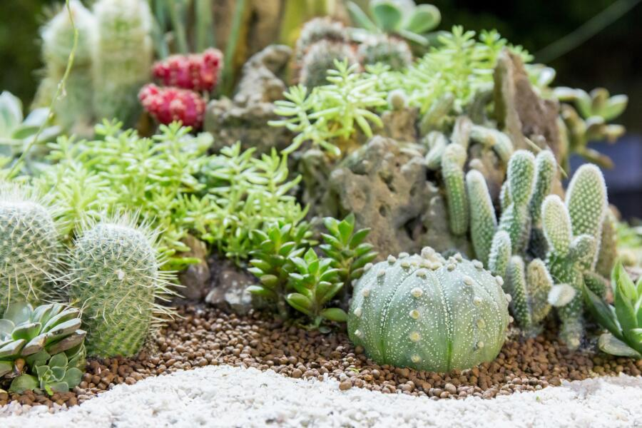 Комнатное цветоводство: как сделать мини-садик?