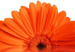 Бывают ли цветы-великаны? Фантазия