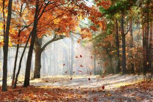 Как пахнут осенние листья? От судьбы не уйти