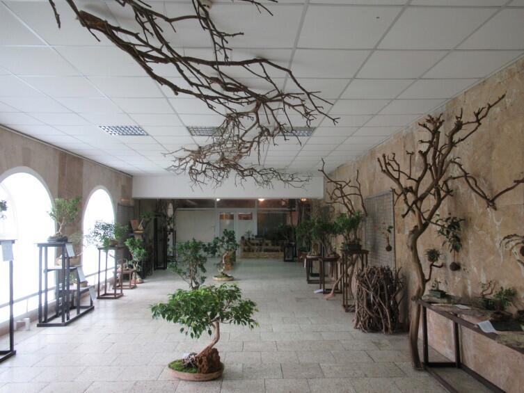 Бонсаи в ботаническом саду