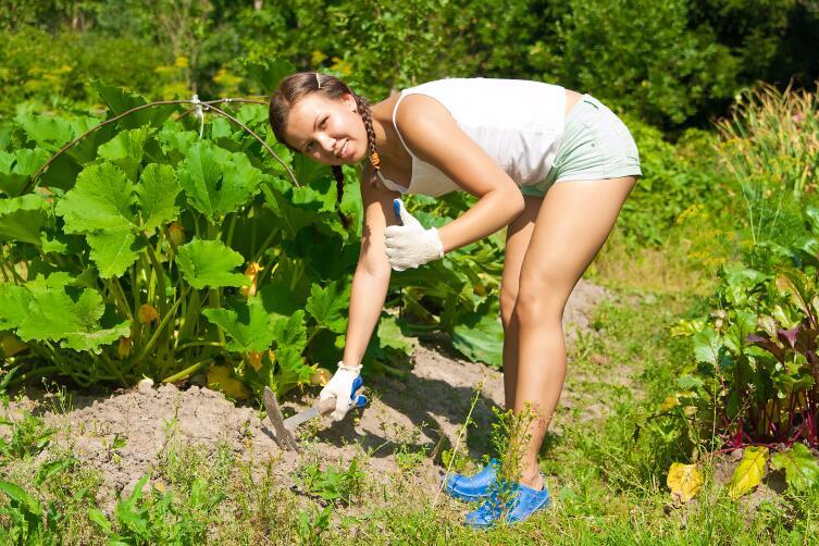 Бывает ли урожай ленивым?