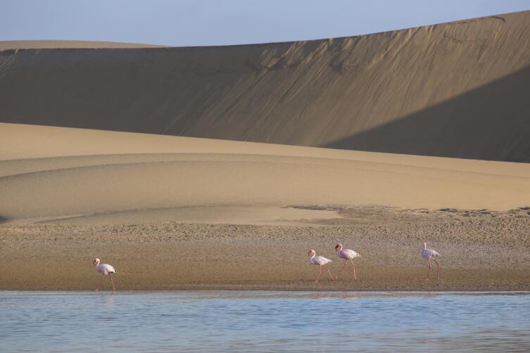 Там, где пустыня наступает на океан...