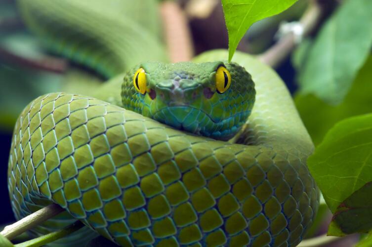 Что нам известно о змеях? Интересные факты из жизни рептилий