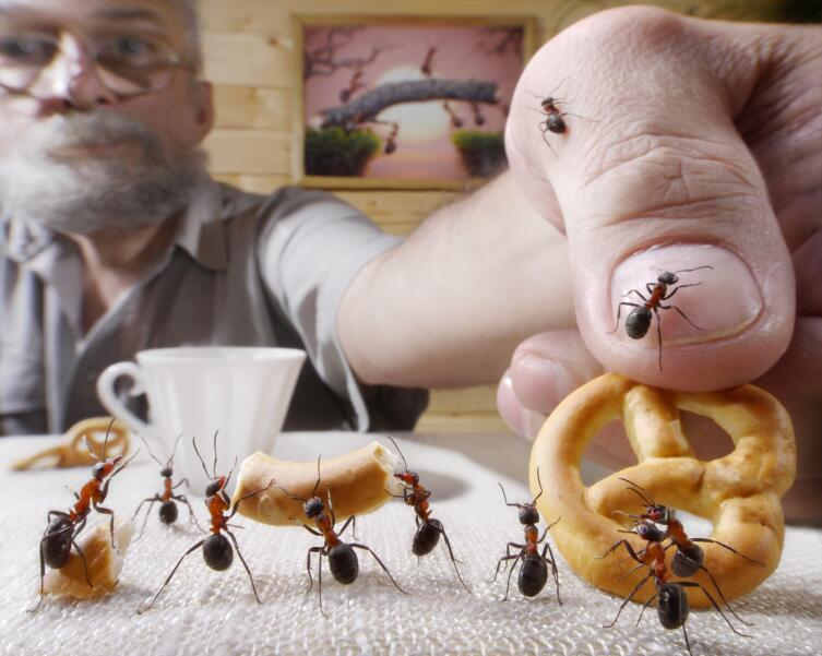 За ваши деньги вас покусают насекомые, которые живут в трущобах