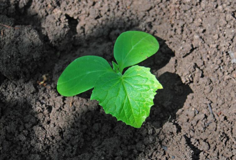 Как вырастить экологически чистые овощи?