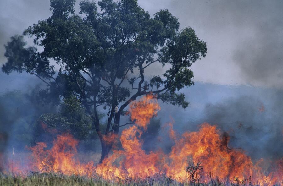 Лесные пожары. Какие они бывают?