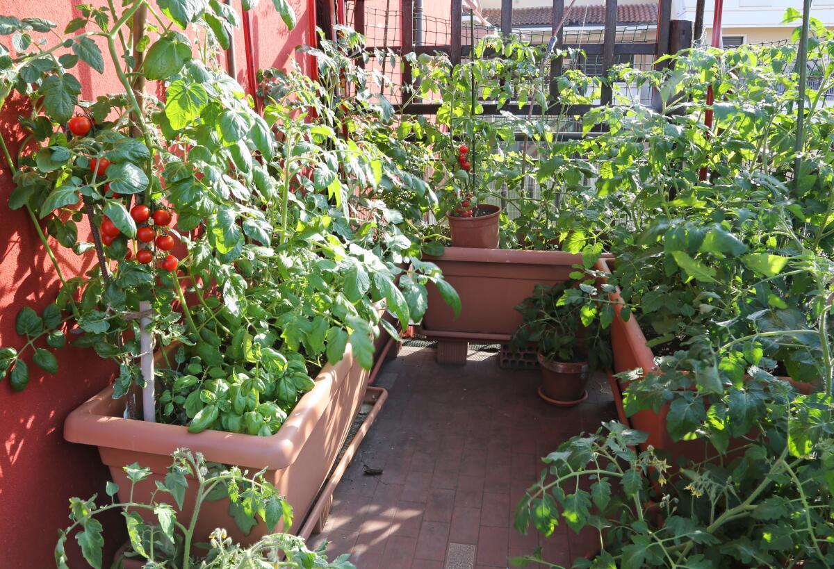 Как превратить балкон в огородик и почему хорошо иногда казаться жадиной?