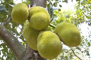 Экзотические фрукты: что растет в тропиках?