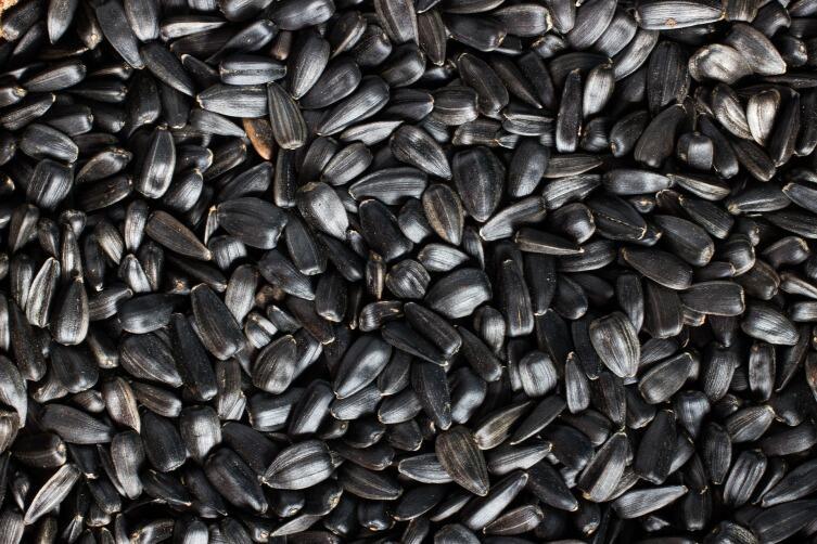 Полезно ли грызть семечки?
