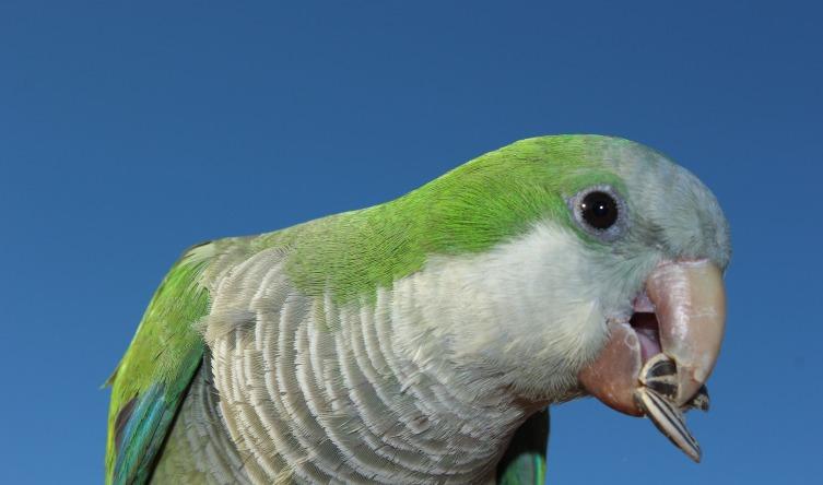 Хорошо птичкам - зубов нет, а значит и разрушаться нечему