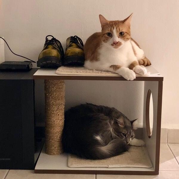 Как завести еще одного кота, не заводясь самому? Пять советов от владельца пяти котов