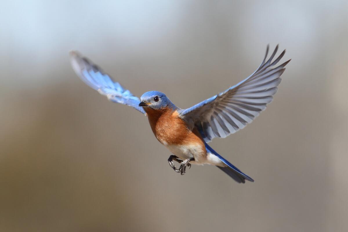 Экологическая среда города. Как различать голоса птиц?