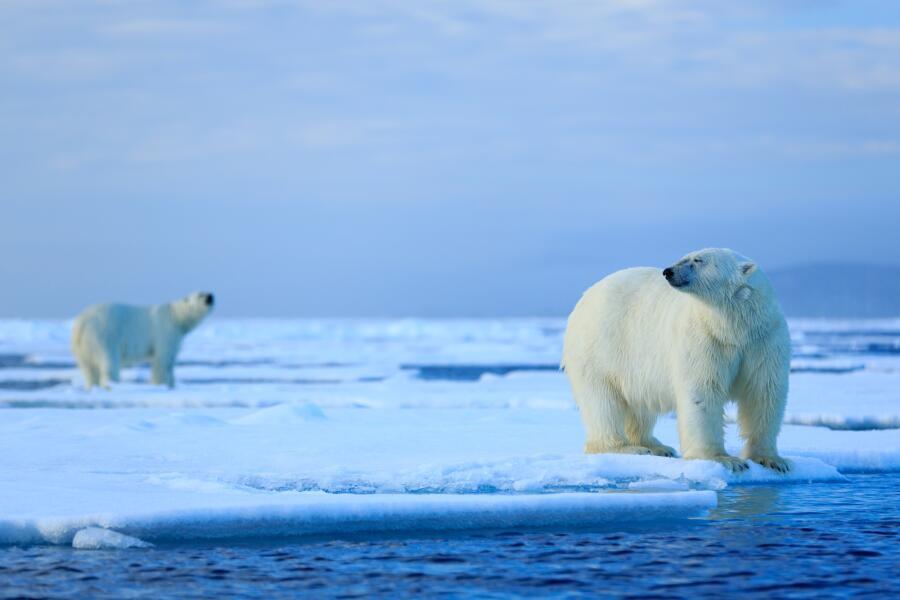 Арктический пейзаж