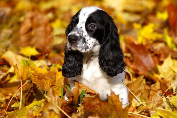 Корсар. Что нужно собаке для счастья? Часть 1