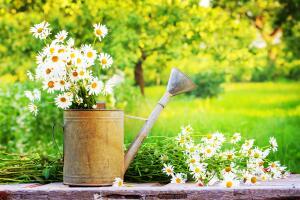 Какие опасности скрывает лето?