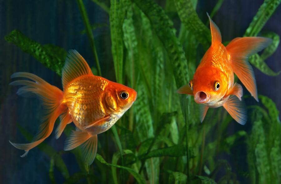 Как кормить аквариумных рыбок? Мастер-класс от дилетанта