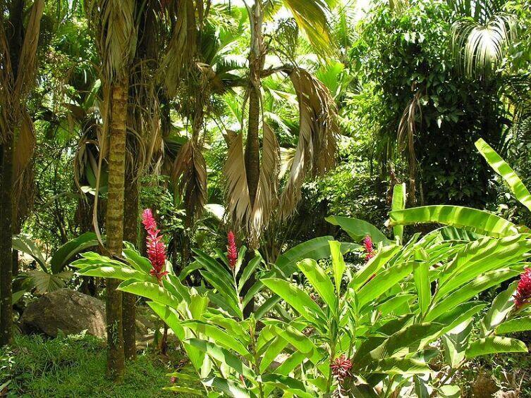 Тропический лес на острове Кокос