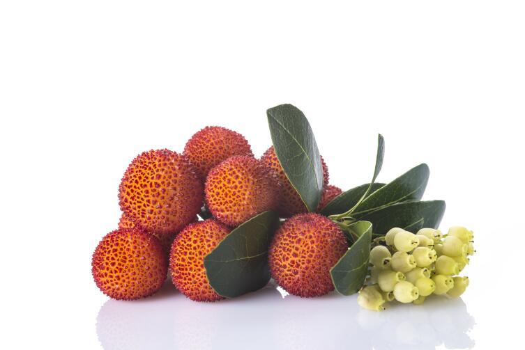 Плоды и цветы земляничного дерева