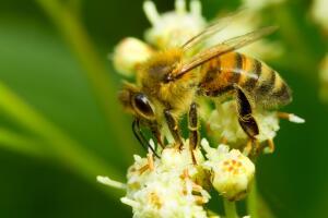 Пчелы – польза, осы – вред. Очередное заблуждение?