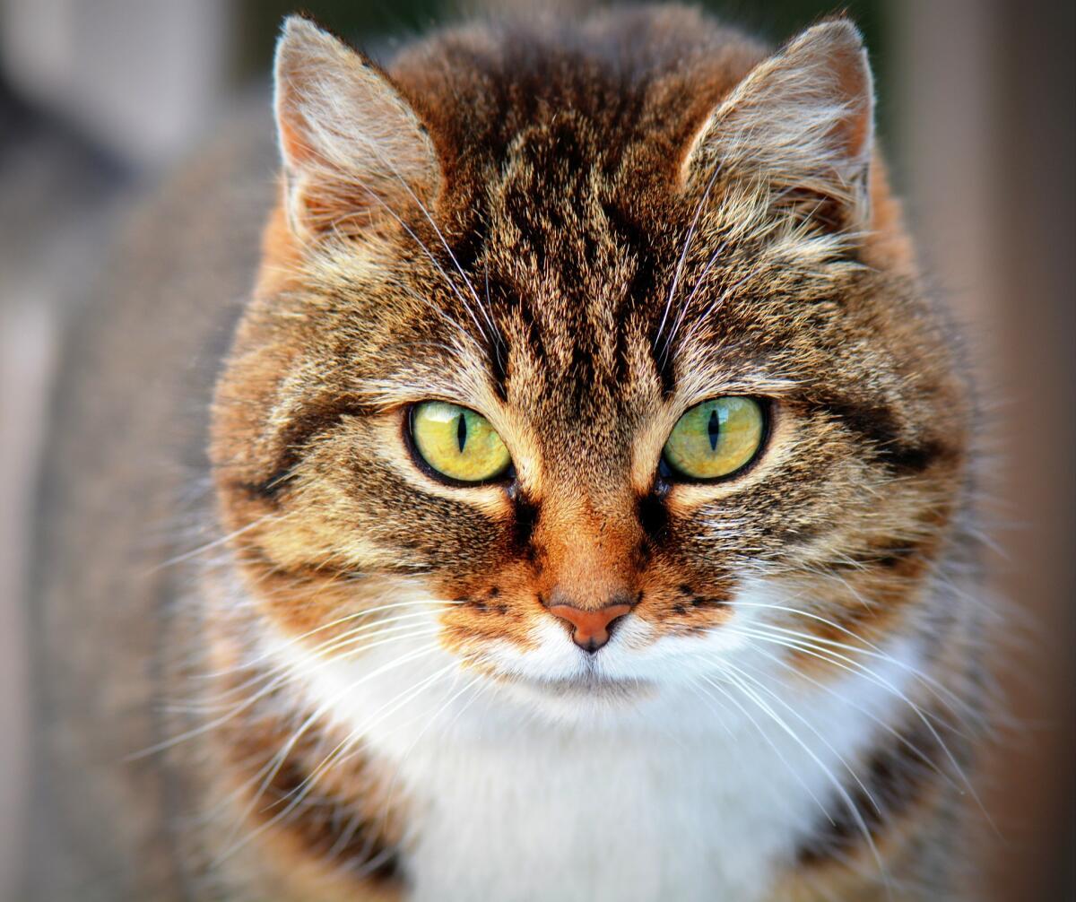 посмотреть интересные фото кошек образом, его