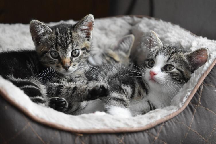 Почему кошка выбрала вас? Ответ  даст астрология