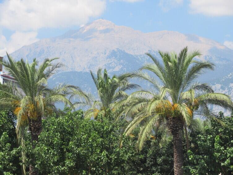 Таврские горы, пальмы, Анатолийское побережье