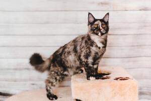 Нужна ли свобода кошкам?