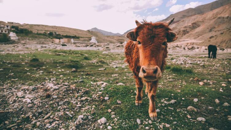 Могут ли животные быть преступниками? Удивительные факты из жизни зверей-нарушителей