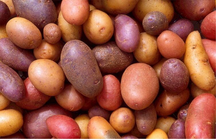 Как вырастить картофель? Личный опыт