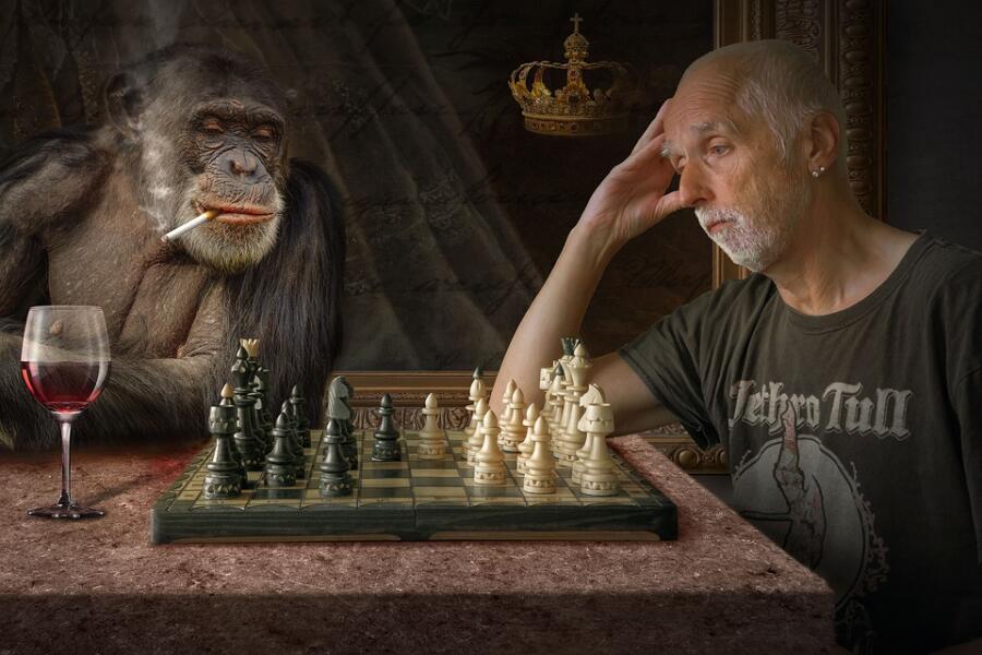 Экзотические животные. Как покупать обезьянку для дома?