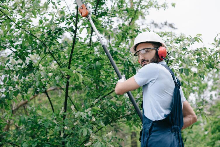 Дождитесь первого урожая, потом решайте, какие деревья оставить, какие убрать